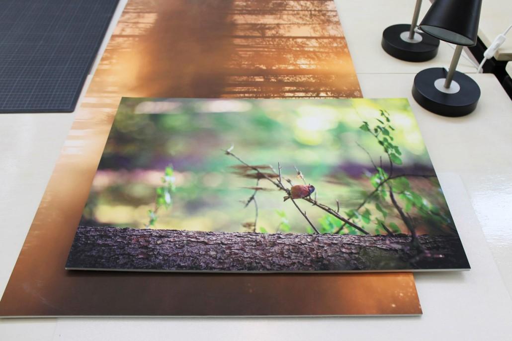 Широкоформатная печать на пенокартоне | фото 1